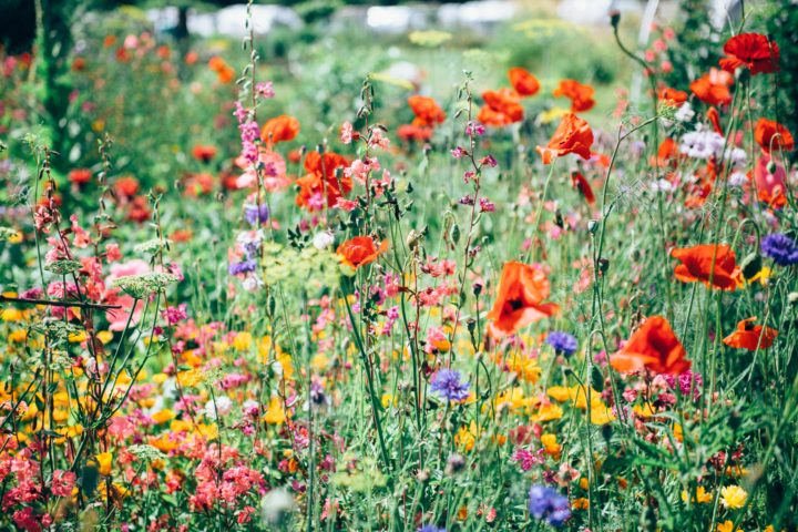 What to Do for a Lush Green Garden