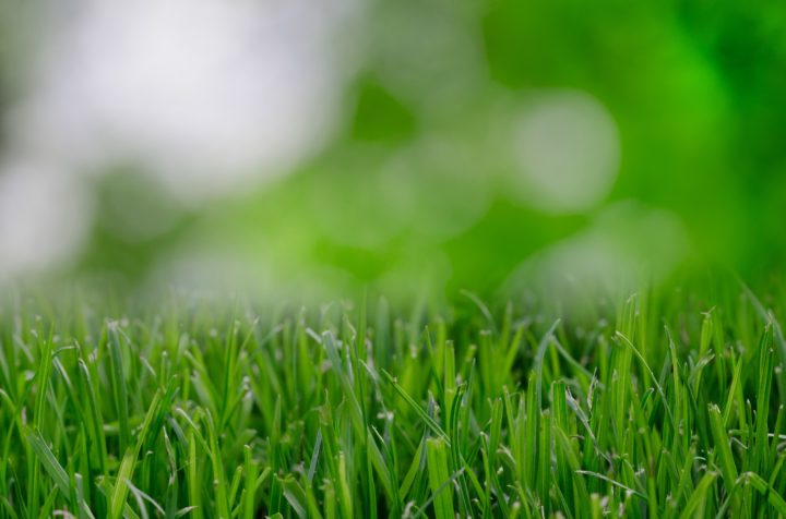 Ensuring Your Backyard is a Safe Environment