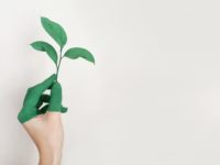 Sustainability at Home: Save Money and the Environment