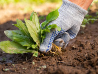 How to Maintain Your Garden Weeds Better