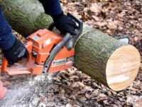 Top Tips To Easily Choose The Ideal Chainsaw For Hardwood