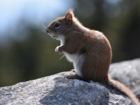 What Damage Can Squirrels Do To Your Home And How To Prevent It