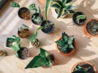 6 Expert Tips To Create A DIY Indoor Garden