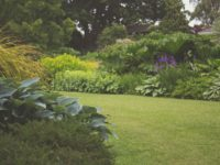 4 Simple Ways to Give Your Garden a Fresh Look