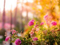 9 Cost-Friendly Garden Hacks